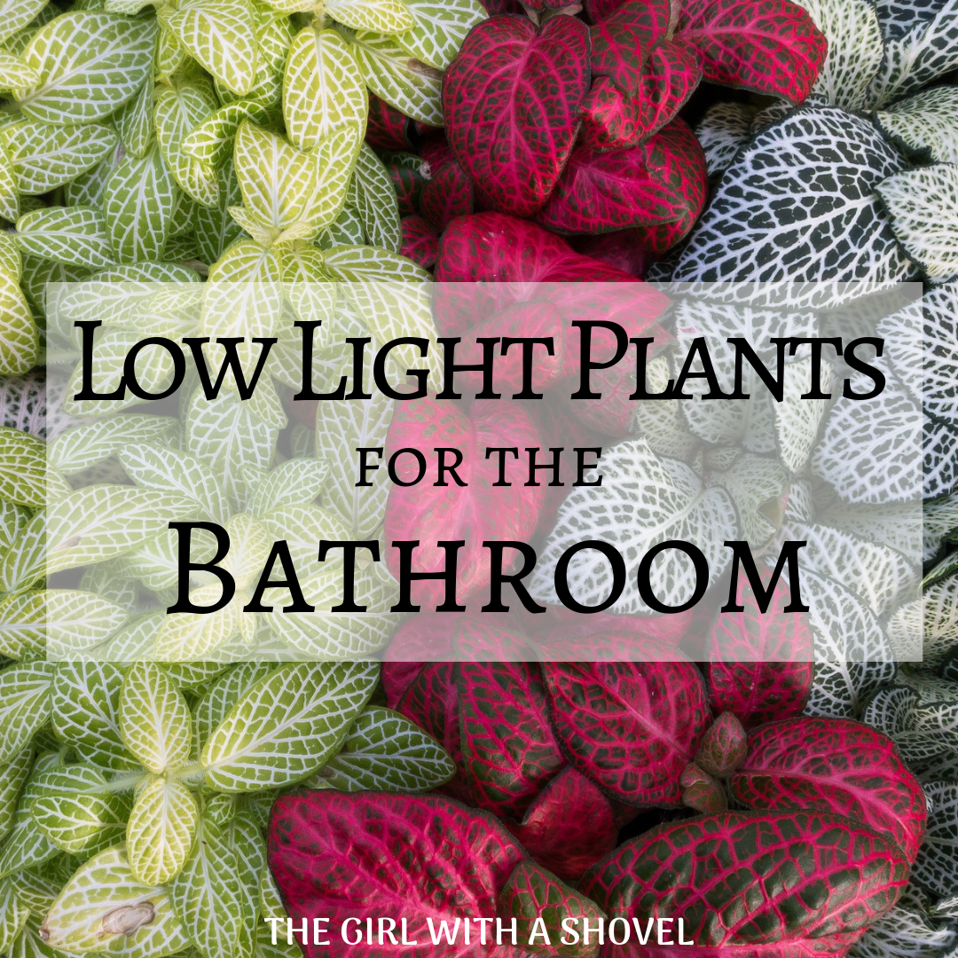 Low Light Plants for the Bathroom   The Girl with a Shovel